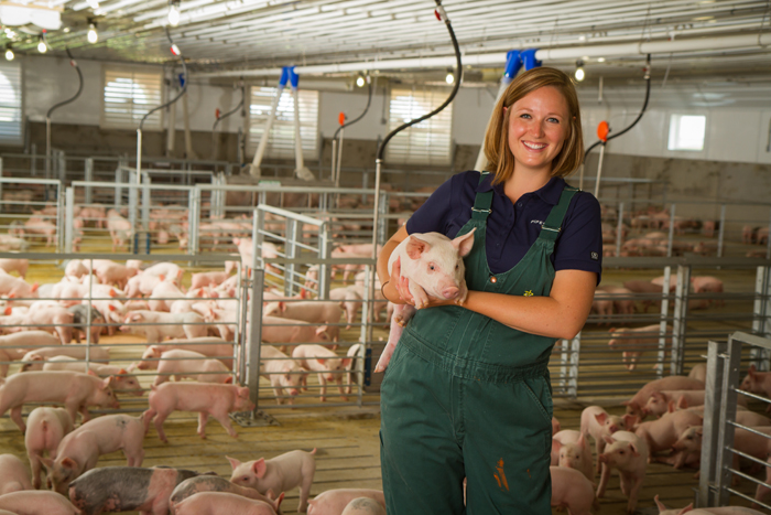 Click for Swine Health Information